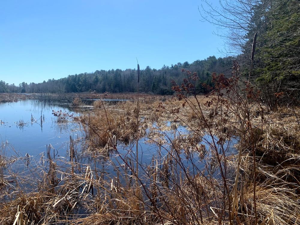 Marsh View (Credit: Paula Bourque)