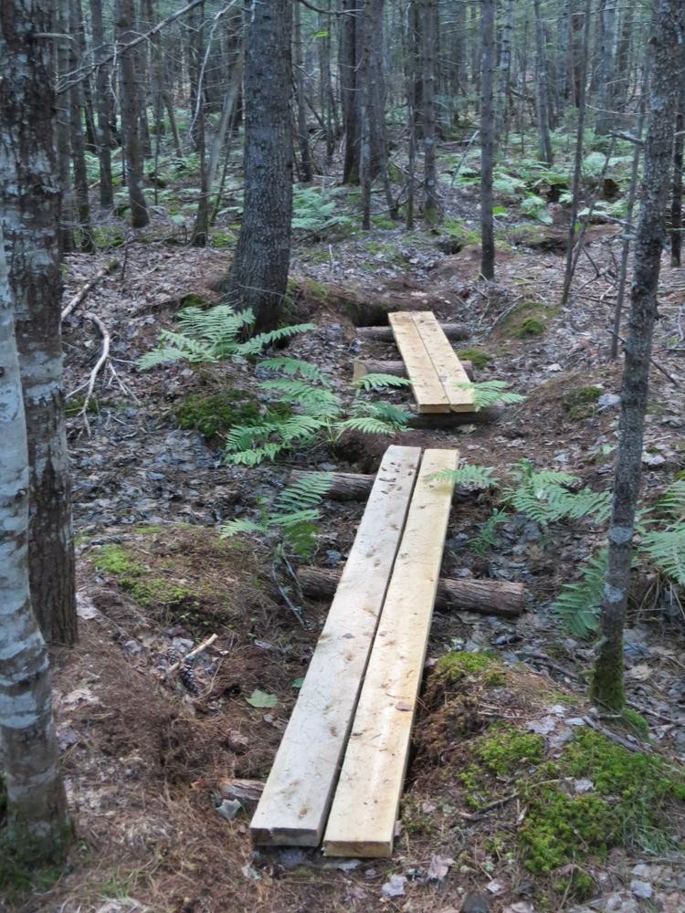 Boardwalks on the trail (Credit: DLLT)