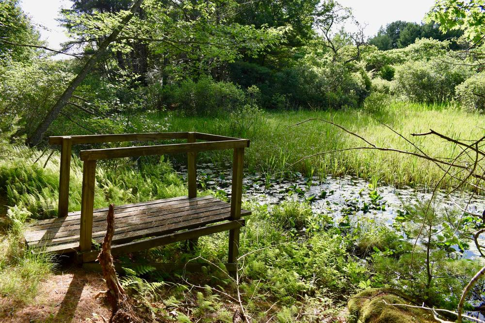Viewing platform over pond (Credit: Beth Whitney)
