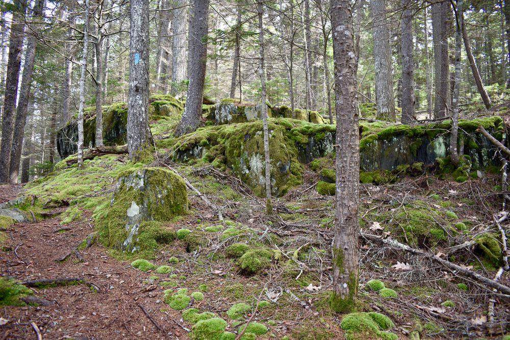 Wonderful moss everywhere (Credit: Beth Whitney)
