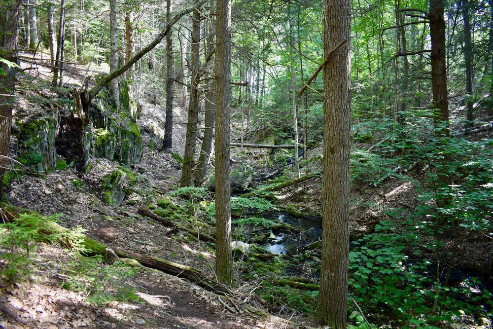 Babbling brook (Credit: Beth Whitney)
