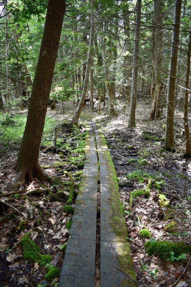 Boardwalk on the trail (Credit: Beth Whitney)