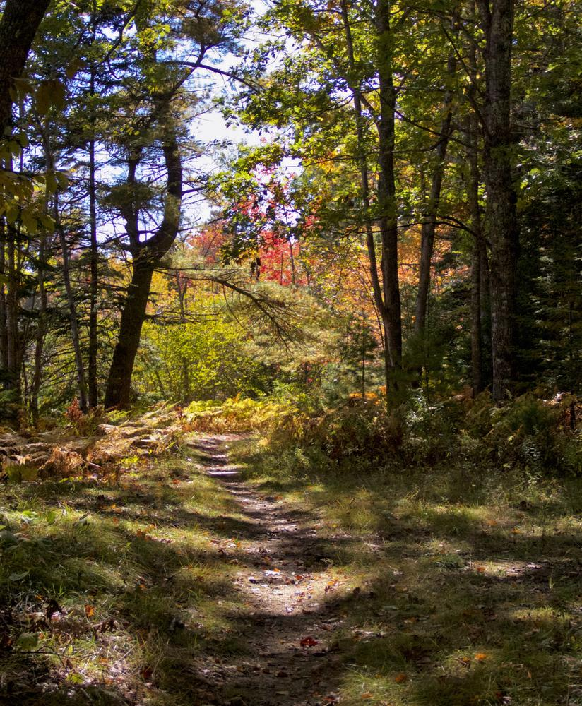 Lobster Cove Meadow (Credit: Ansar Actograph)