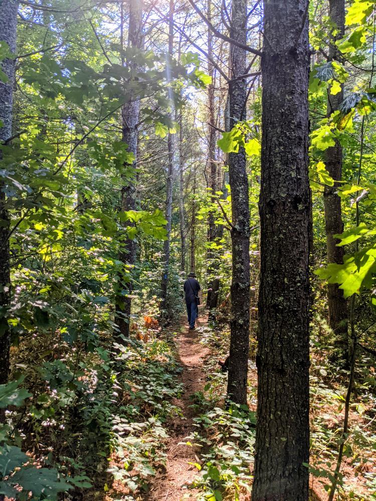 Sunlit trail (Credit: Karen Lynne Graves)
