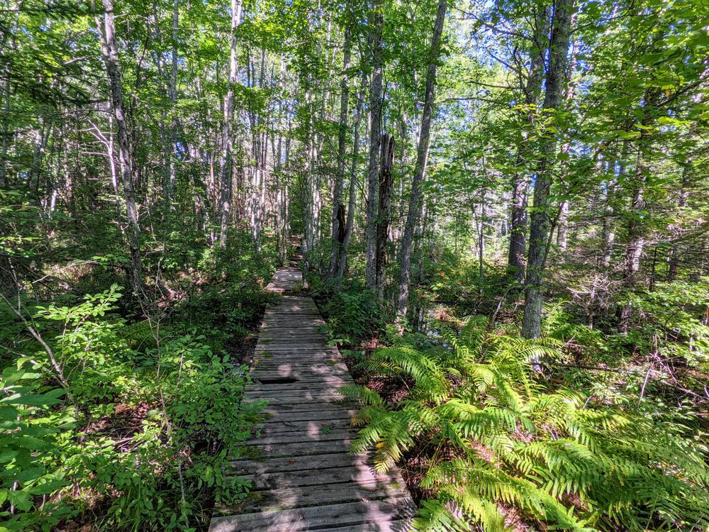 Boardwalk and swamp (Credit: Karen Lynne Graves)