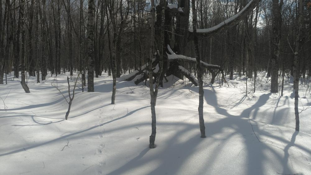 Mount Blue State Park - Cross-country Ski Trails