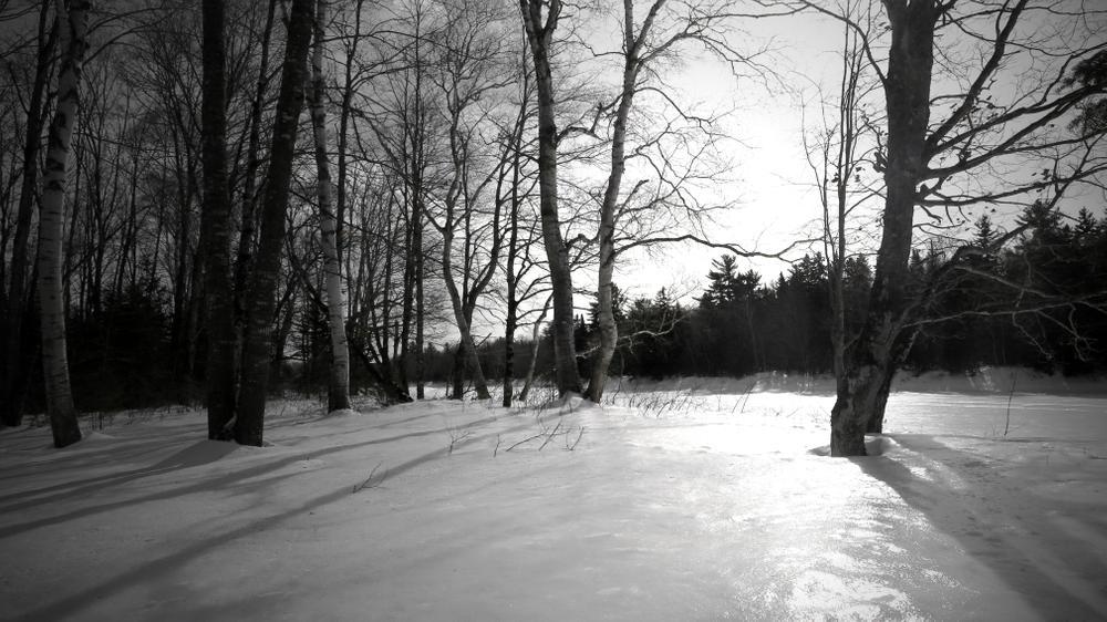 Silver Maple Trail (Credit: Hope Rowan)