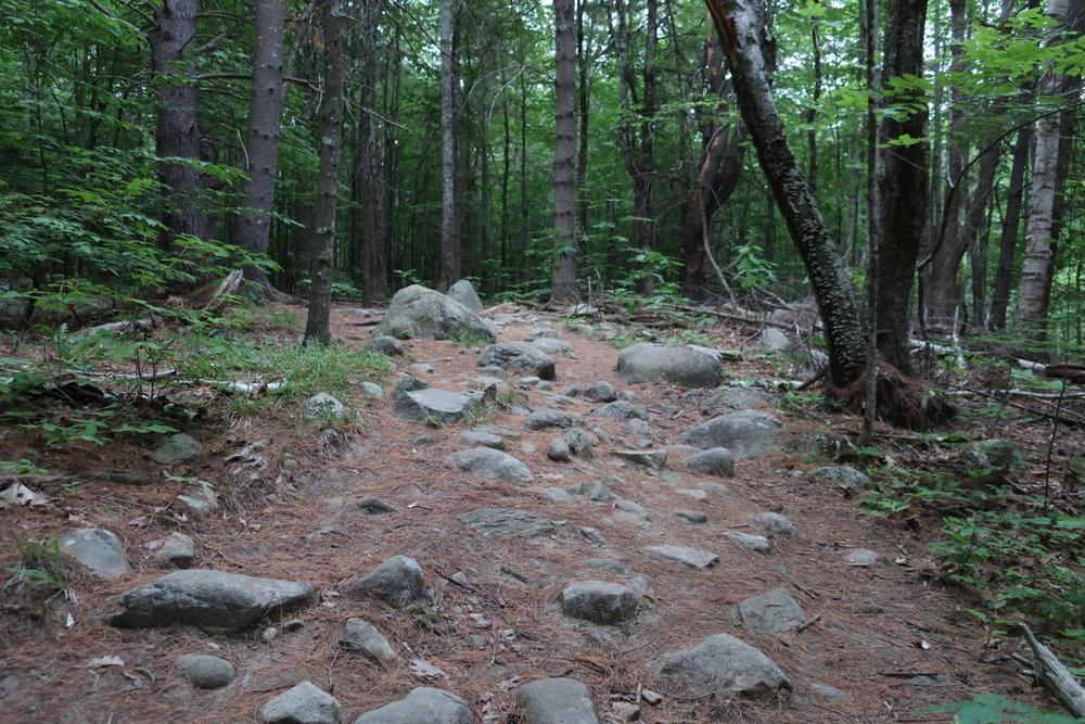 On the Blueberry Trail (Credit: M.Morris)