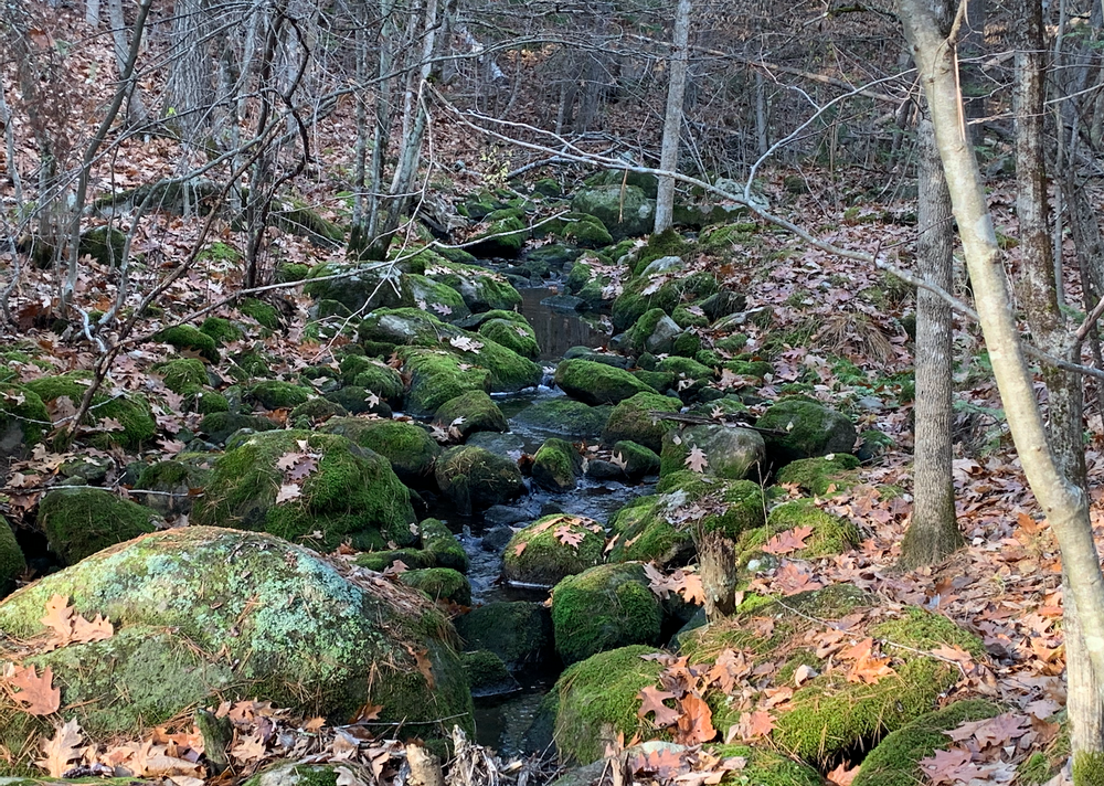 Trail follows a gentle stream (Credit: Paula Bourque)