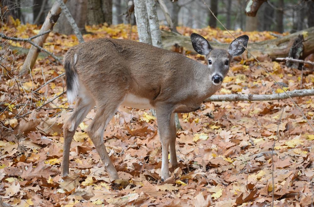 Trail Head Visitor (Credit: Paula Bourque)
