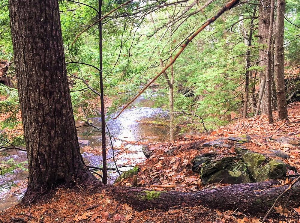 Along the Little River Trail (Credit: Belfast Bay Watershed Coalition)
