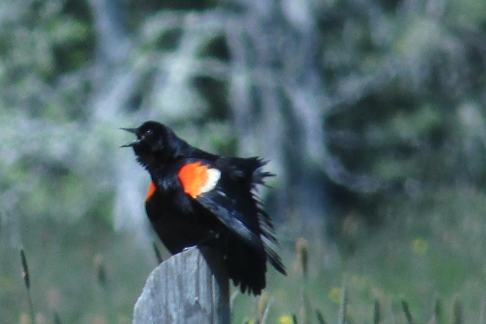 Farm Loop Trail Bird (Credit: Patty Brinkman)