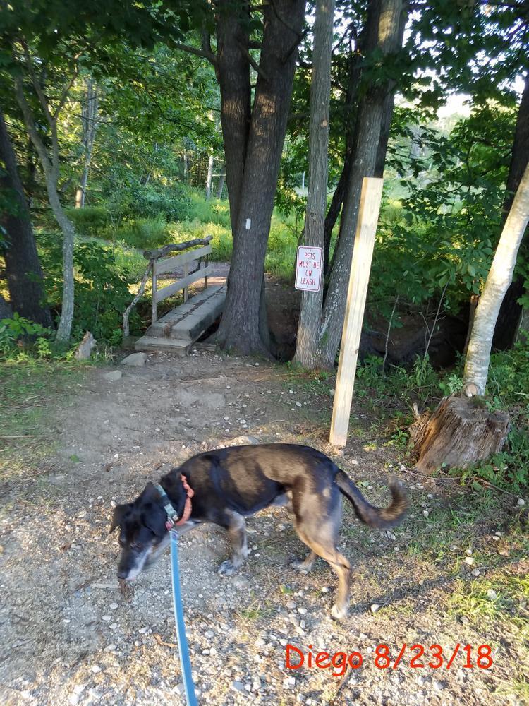 Wolfe's Neck Center Trails