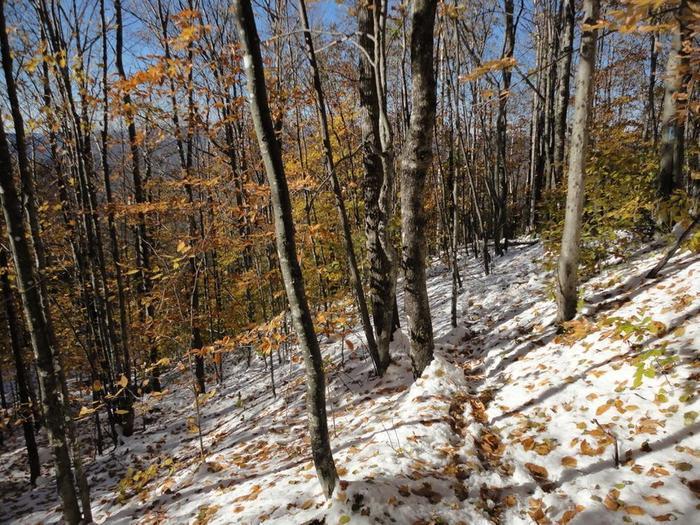 Broken in trail at base (Credit: Remington34)