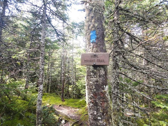 Excellent blazing and signage so that you stay on the Wright Trail and not the Wrong one (Credit: Remington34)