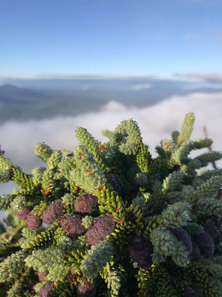 """Smokin cones"" atop South Horn"