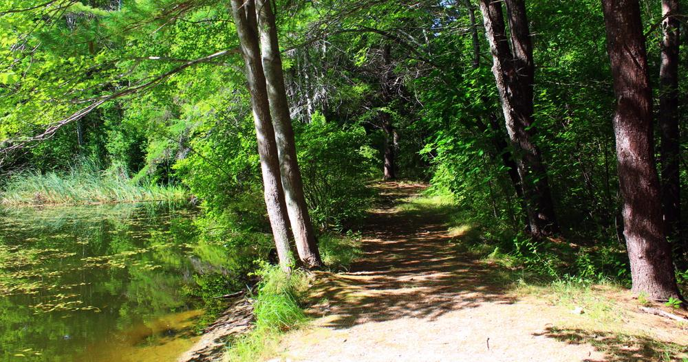 shady walk near the pond (Credit: gary janson)