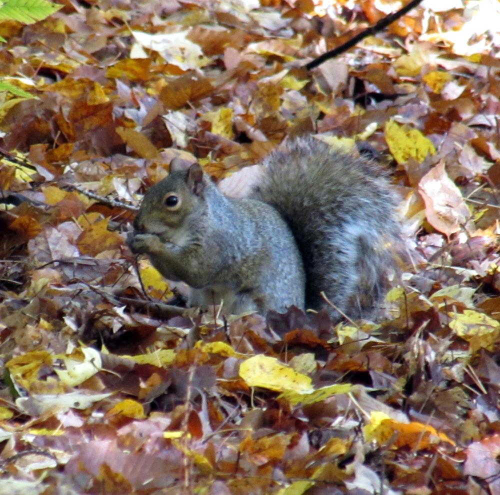 SO Many squirrels! (Credit: gary janson)
