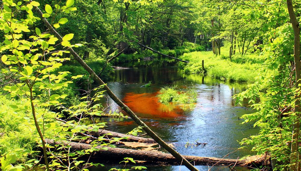 colorful view of the stream (Credit: gary janson)
