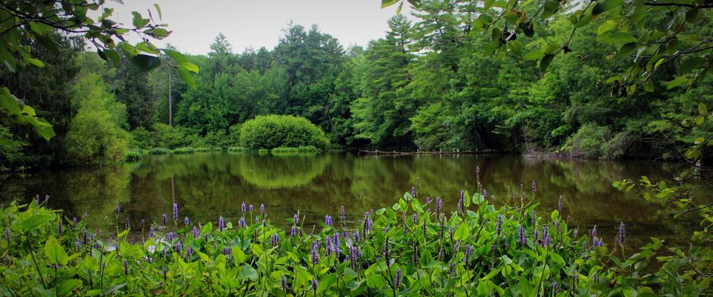 pond reflections (Credit: gary janson)