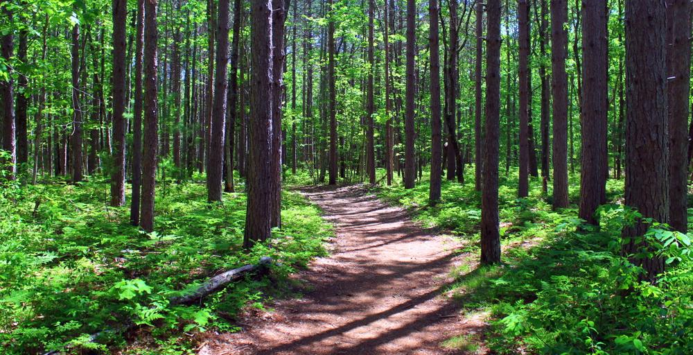quiet stretch of trail (Credit: gary janson)
