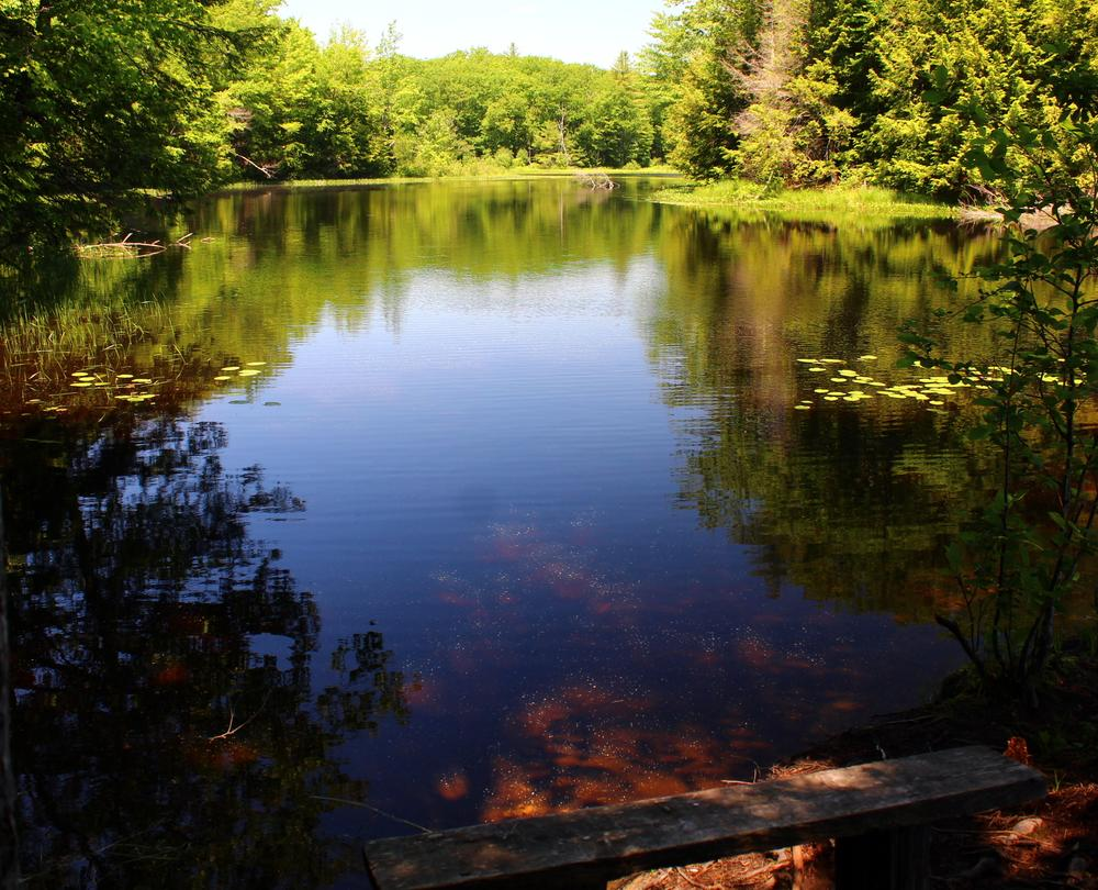 A view of the pond in warmer times (Credit: gary janson)