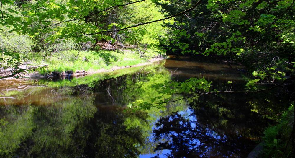 quiet waters (Credit: gary janson)