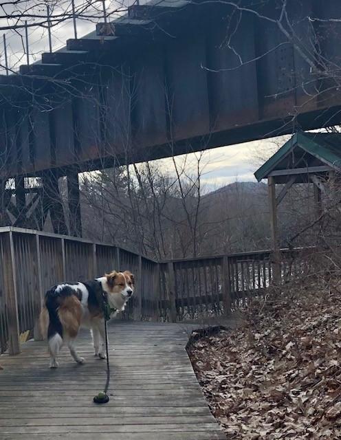 Fenway enjoying the trail