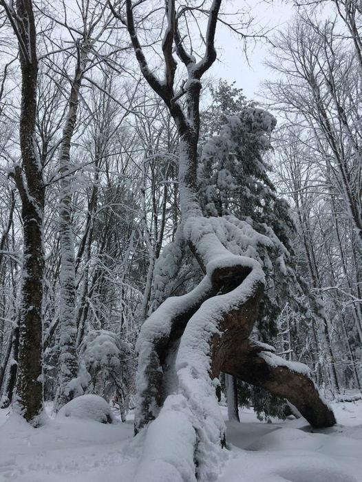 Trail-side tree (Credit: Robert Ratford)