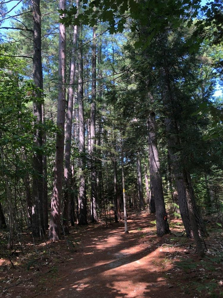 Pretty in the woods at Valentine Farm Trails