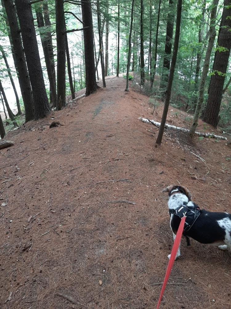 Packard Trail With Sparky (Credit: Dawn Fernandez)