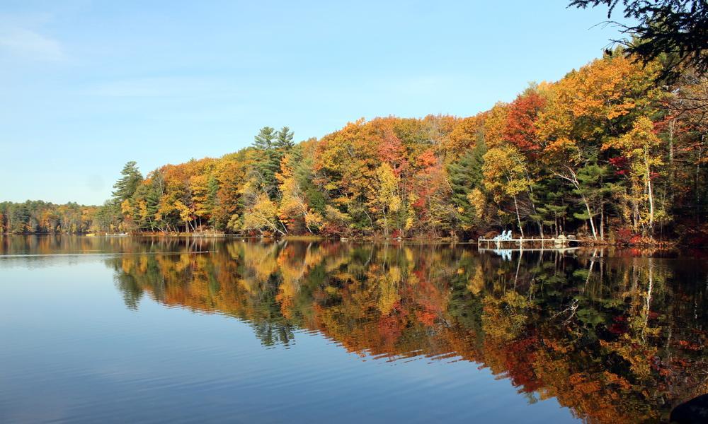 Still waters on the lake (Credit: gary janson)