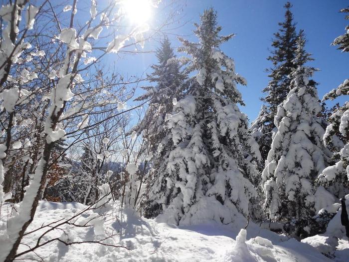 Winter wonderland at half-way point (Credit: Remington34)