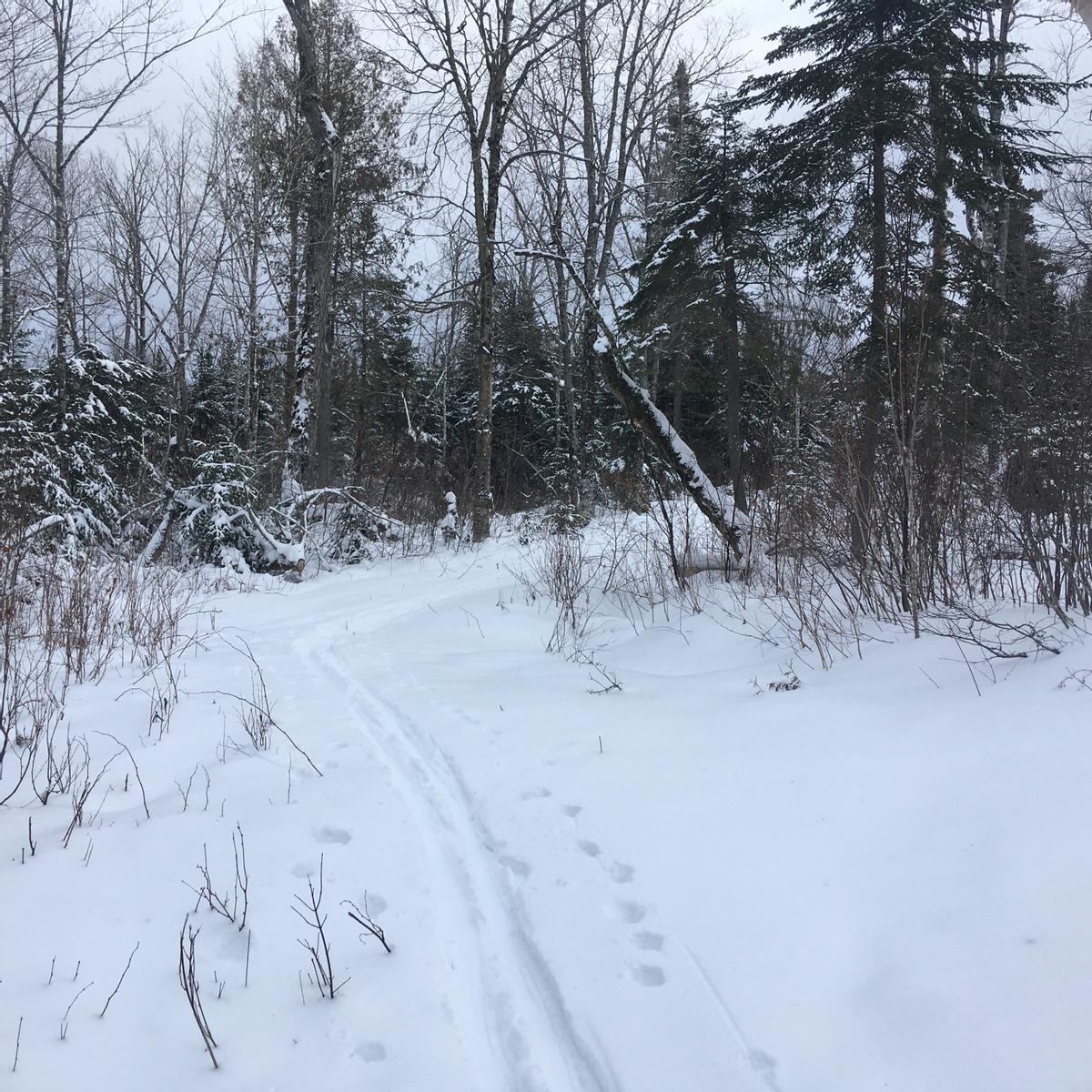 Ski tracks follow a trail in a field