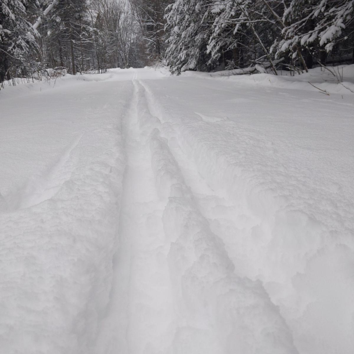 Ski tracks through 6 inches of new snow on a wide trail.