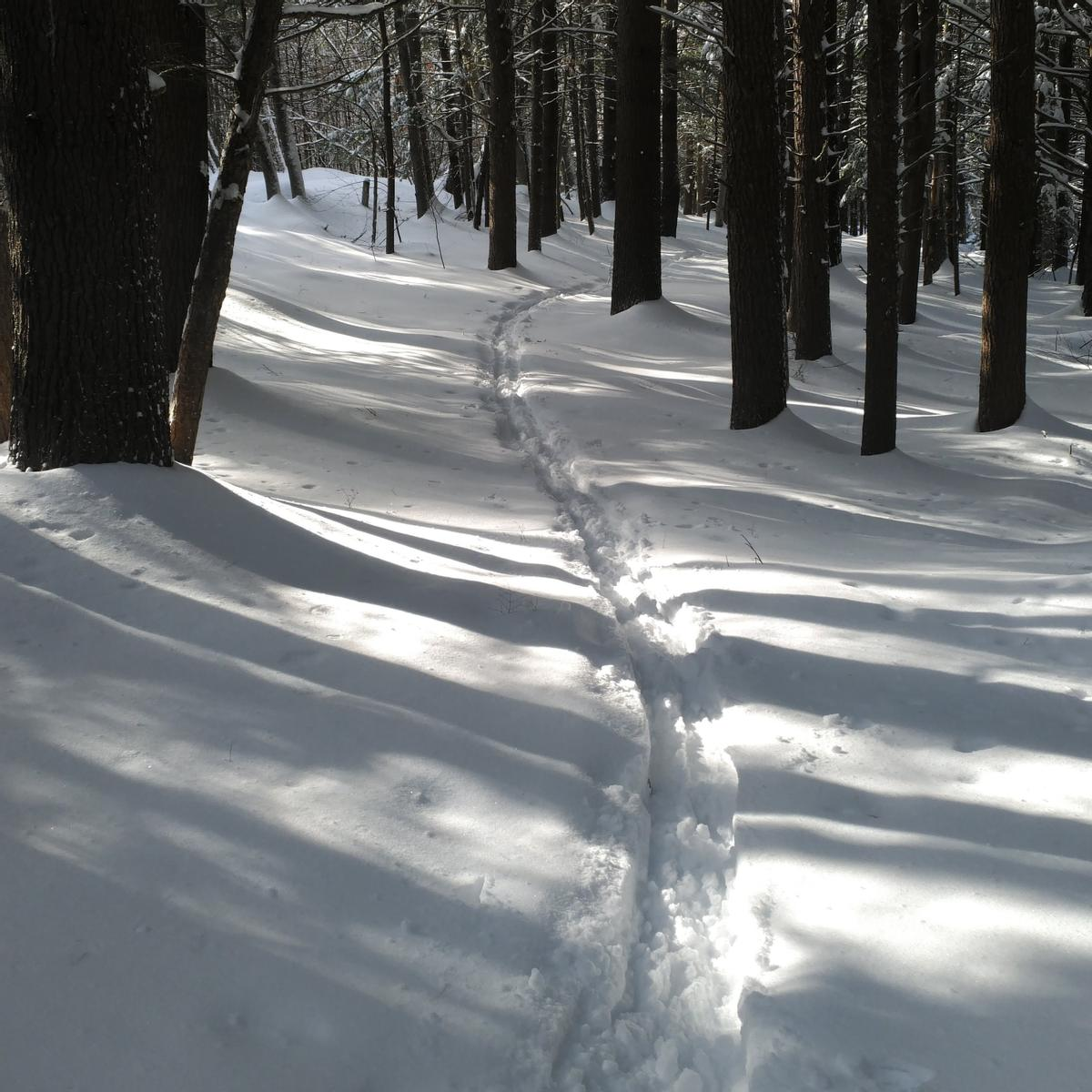 Ski track wind along a narrow trail in the woods