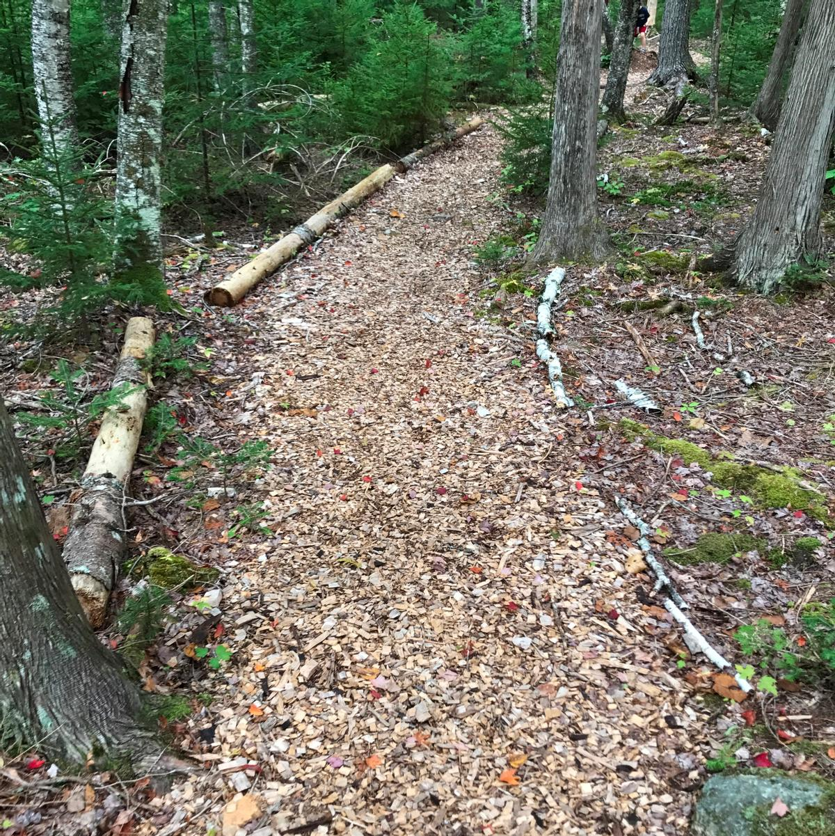 Wood chips and logs indicate where a wide pathway goes through the trees