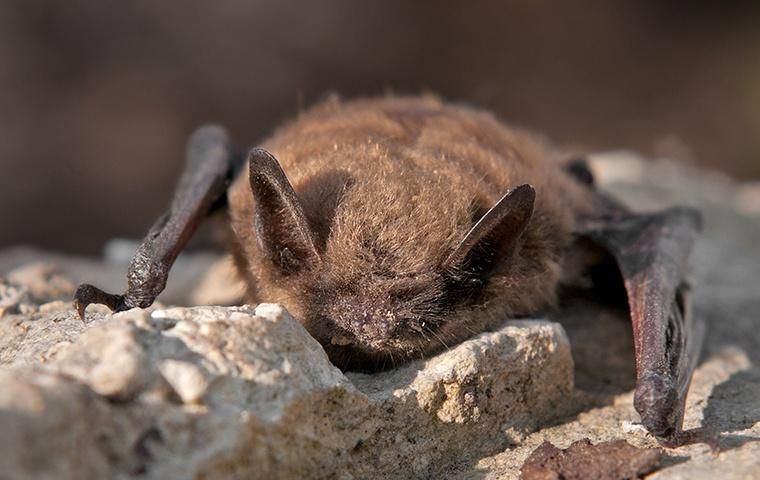 a bat crawling on the side of a house