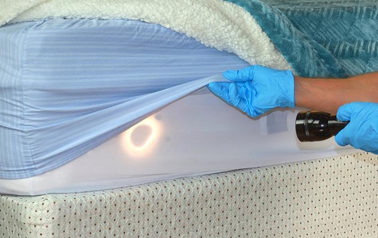a pest control technician inspecting a mattress for bed bugs