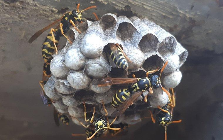 wasp nest on a brick wall