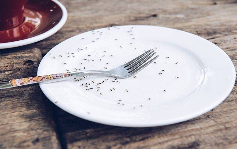 ants crawling on plate with for on it
