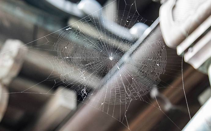 spider web on house seen during inspection