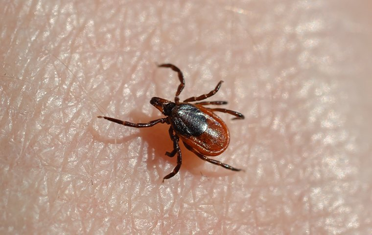 a tick crawling on a mans hand