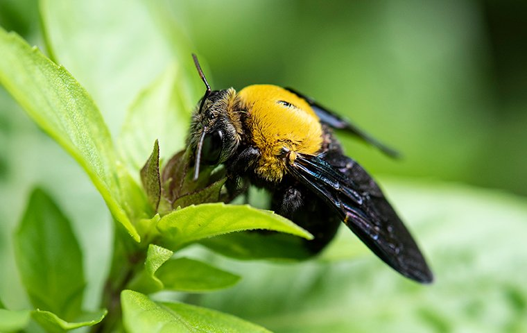 a carpenter bee on a green plant