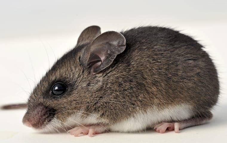 a rodent of a parkesburgh property