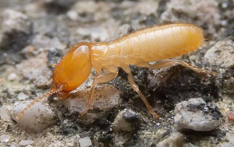 termites infesting a parkesburgh property