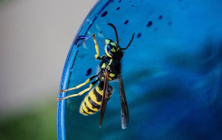 a wasp crawling on glass outside