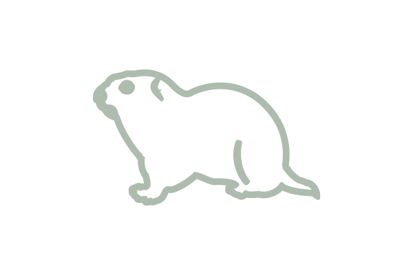image of gopher