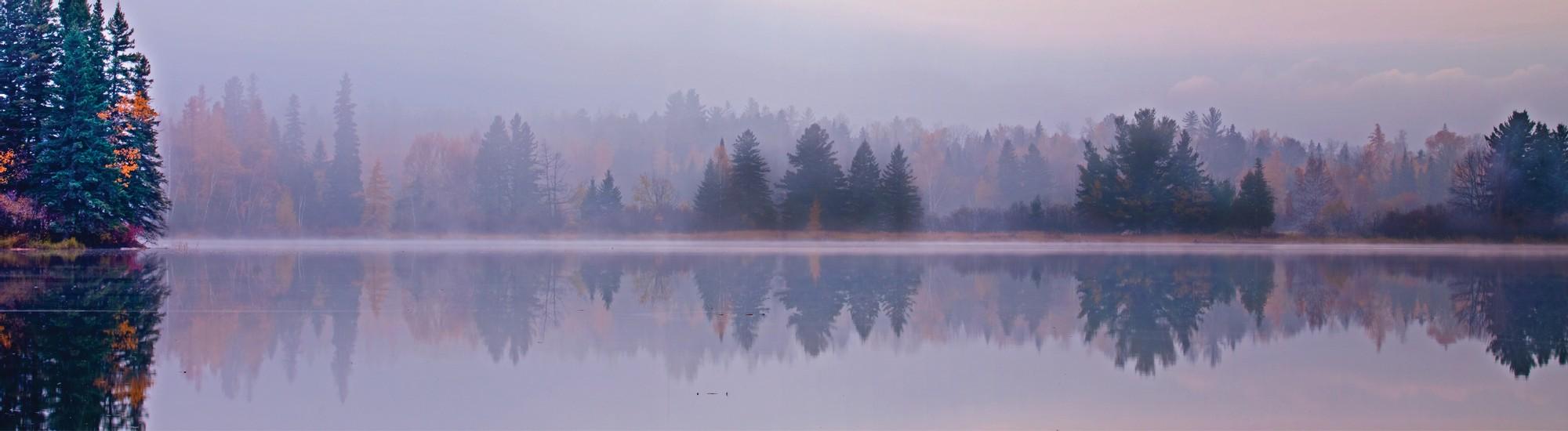 Misty pond with fir trees