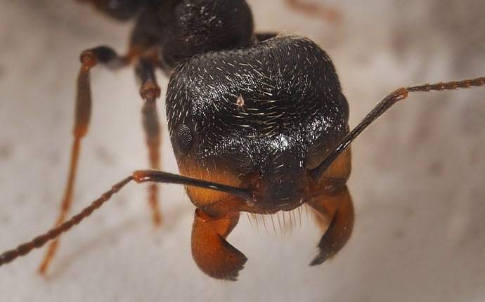 close up of an ant in idaho falls
